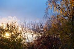 Bild av höstskogen på solnedgången Arkivbilder
