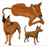 Bild av hunden. Fotografering för Bildbyråer