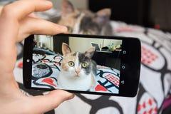 Bild av katten vid smartphonen Arkivbilder