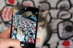 Bild av katten vid smartphonen Arkivfoto