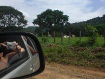 Bild av kvinnan reflekterad i bilbackspegeln som tar bilder av bygdlandskapet arkivbild