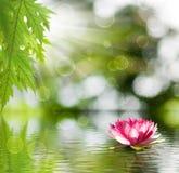 bild av lotusblomma på vattennärbilden arkivbilder