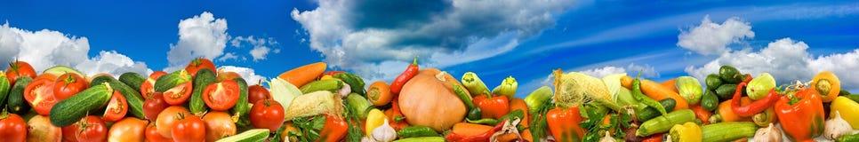 Bild av många rå grönsaker en himmelbakgrund arkivfoto
