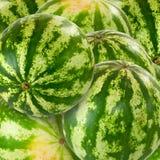 Bild av många vattenmelon royaltyfri fotografi