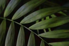 bild av mörk blom- bakgrund för tropiska sidor Royaltyfri Bild