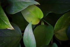 bild av mörk blom- bakgrund för tropiska sidor Arkivfoto