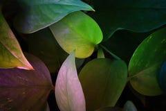bild av mörk blom- bakgrund för tropiska sidor Royaltyfria Bilder