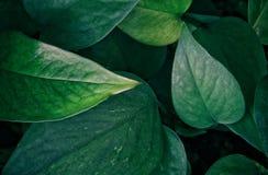 bild av mörk blom- bakgrund för tropiska sidor Fotografering för Bildbyråer