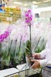 Bild av mannen eller kvinnan som har gyckel som väljer för att köpa härliga violetta orkidér i supermarket eller DIY-varuhus Arkivbilder
