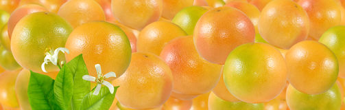 Bild av närbilden för många den läckra mogna apelsiner royaltyfri fotografi