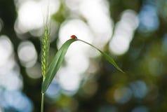 Bild av närbilden för naturlig bakgrund Fotografering för Bildbyråer