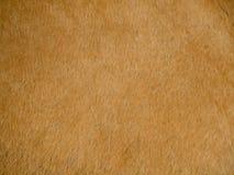 Bild av naturligt djurt läder fotografering för bildbyråer