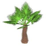 Bild av palmträdet vektor illustrationer