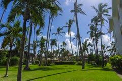 Bild av sikten för låg vinkel för palmträd Royaltyfria Bilder
