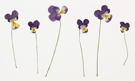 Bild av torkade blommor i flera varianter Royaltyfri Fotografi