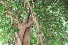 Bild av träd Fotografering för Bildbyråer