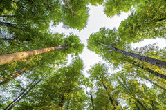 Bild av träd i skog Arkivfoto