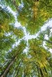 Bild av träd i skog Arkivbild