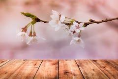 Bild av trätabellen framme av bakgrund för körsbärsröd blomning Royaltyfria Bilder