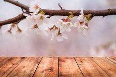 Bild av trätabellen framme av bakgrund för körsbärsröd blomning Fotografering för Bildbyråer