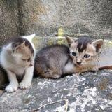 Bild av två sittande kattungar arkivbilder