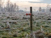 Bild av vinterlandskapet med kraftledningar royaltyfri foto