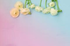 bild av vita blommor för vår på träbakgrund royaltyfri bild