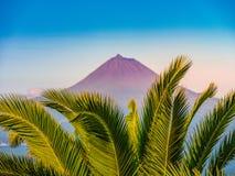Bild av vulkanberget av picoen med palmträd i förgrunden arkivbilder