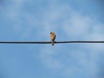 Bild blured sätta sig elektrisk tråd för par fåglar Royaltyfri Bild