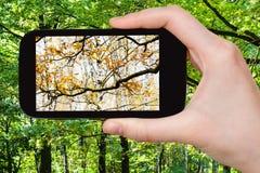 Bild der Änderung des Sommers und der Herbstsaisons Lizenzfreies Stockbild
