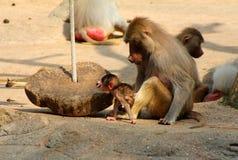 Bild der Affefamilie mit dem Baby Lizenzfreies Stockfoto
