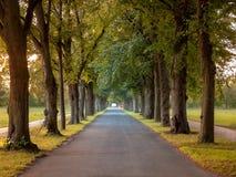 Bild der Allee mit Bäumen und der leeren Straße im Herbst stockfotos