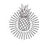 Bild der Ananasfrucht Stockbilder