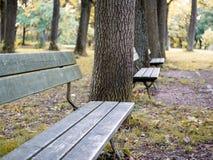 Bild der Bank im Park im Herbst stockfoto