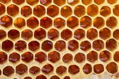 Bild der Bienenwabe Background Lizenzfreies Stockfoto