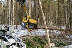 Bild der Blockwinde verringerte den Baum und das Sägen er Stockfotos