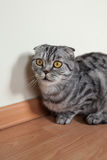 Bild der dunklen Katze sitzend auf dem Boden nahe bei der Wand Stockfoto
