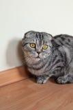 Bild der dunklen Katze sitzend auf dem Boden nahe bei der Wand Lizenzfreies Stockbild