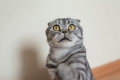 Bild der dunklen Katze sitzend auf dem Boden nahe bei der Wand Lizenzfreies Stockfoto