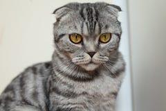 Bild der dunklen Katze sitzend auf dem Boden nahe bei der Wand Lizenzfreie Stockbilder