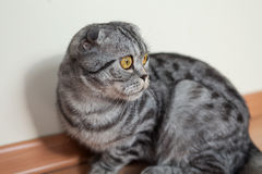 Bild der dunklen Katze sitzend auf dem Boden nahe bei der Wand Stockbild