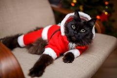 Bild der festlichen Katze in Sankt-Kostüm, das am Stuhl sitzt Lizenzfreie Stockbilder