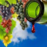 Bild der Flasche mit Tropfen des Weins auf Traube bündelt Hintergrund Stockbild