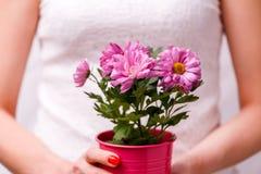 Bild der Frau Topf mit rosa Blume halten Stockbild