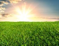 Bild der grünen Rasenfläche und des hellen blauen Himmels Stockfotos