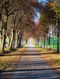 Bild der Herbstallee mit Blättern und Sonnenglanz lizenzfreie stockbilder