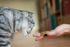 Bild der Katze, die durch Frau einzieht Köstlich!! Lizenzfreie Stockbilder