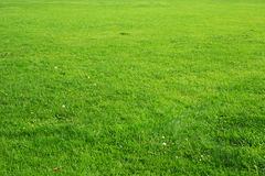 Natürliche Hintergrundbeschaffenheit des grünen Grases Stockbilder