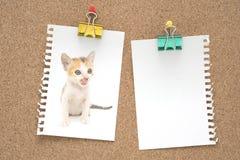 Bild der netten Katze auf Briefpapier Stockfotos