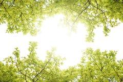 Bild der Niederlassung mit grünem Blatt und Sonnenlicht in der Mitte Lizenzfreie Stockfotografie